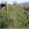 fence-animals-out-of-stream